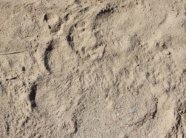 a field guide to the animal tracks of southern africa